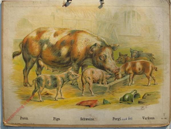 731 - Porca, Pigs, Schweine, Porgi, Vakerns